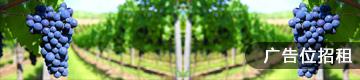 葡萄酒网vine100广告位右侧