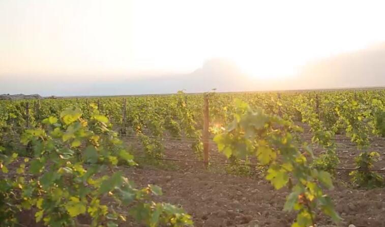 贺兰山东麓葡萄酒产区