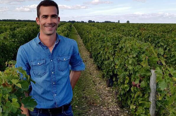 波尔多品丽珠葡萄品种将会增加