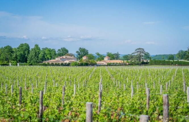 波尔多2020年份期酒葡萄园
