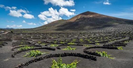 西班牙加那利群岛的葡萄种植业处于老龄化危机中