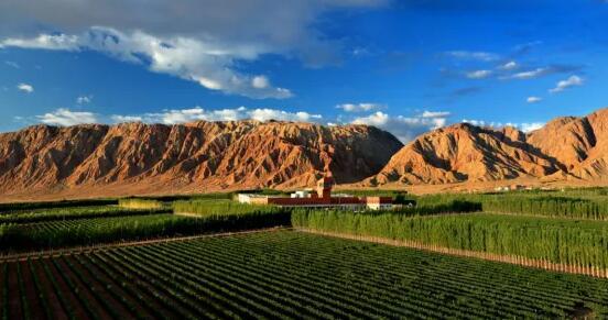 新疆巴州葡萄园